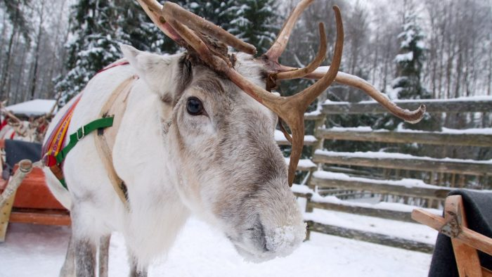 Drive-through Reindeer Visits coming to Capital Area District Libraries