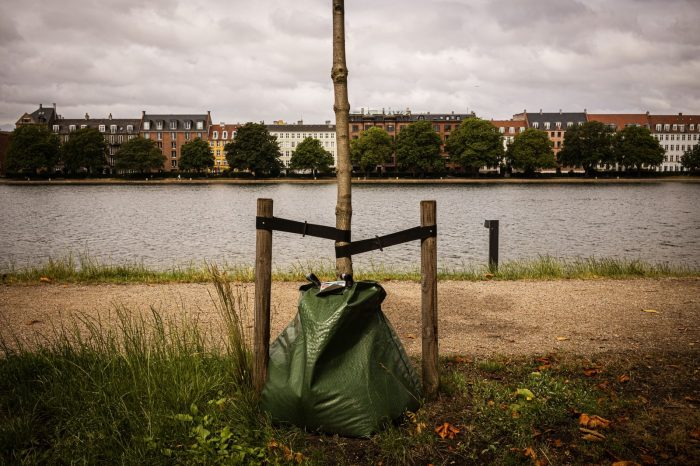 The Darker Side of Tree-Planting Pledges
