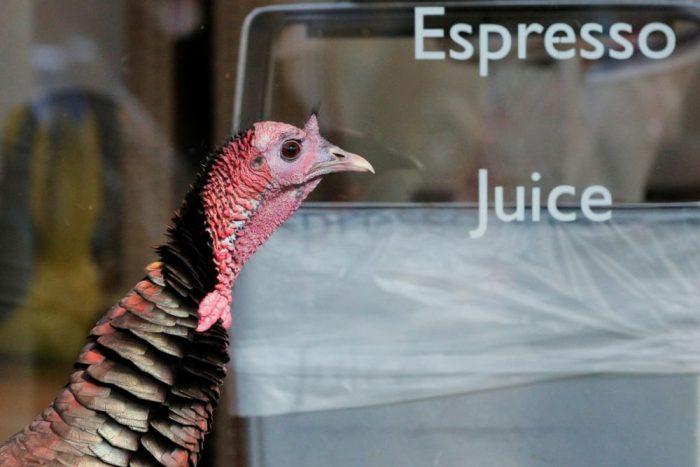 Turkeys in Your Neighborhood? Get Used to It.