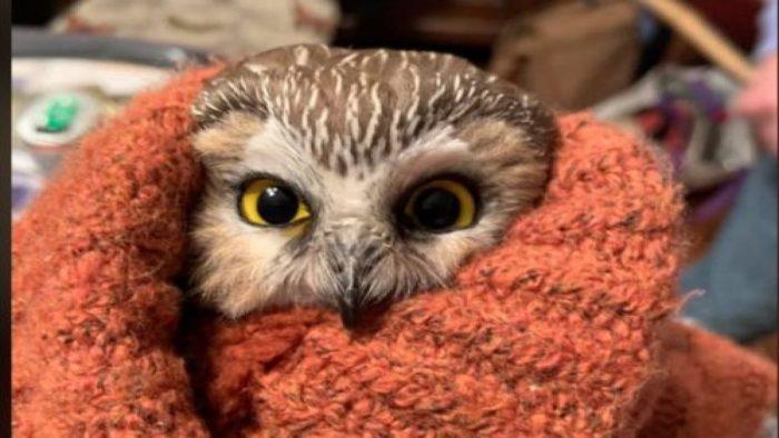 Bobblehead raises over $6,000 for wildlife refuge center